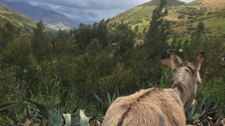 The Director's Travel Blog, Day 2: Trujillo to Otuzco