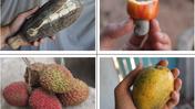 fruitsoftheseason
