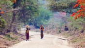 Two Malawian females walk down a beautiful, and orange flower-filled village path carrying wood on their heads