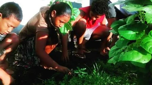 Samoa Students Working in the Garden