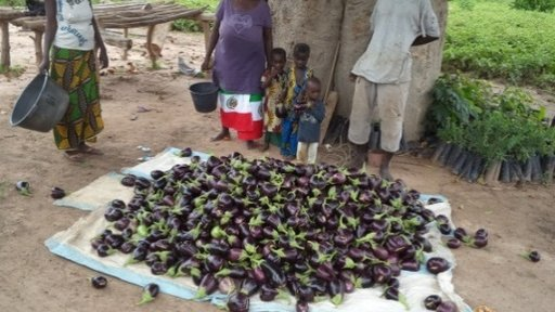 Fatou Wilane with one of her numerous harvests of eggplants.