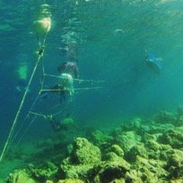 Local stakeholders attach coral fragments to mid-water rope nurseries at one of the marine protected areas, in hopes of rehabilitating and returning the fragments to the reef.