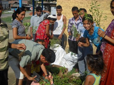 Here, school students in Nepal pack out tree seedlings.