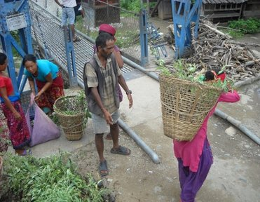 Community members distribute tree seedlings and carry them to different areas.
