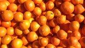 Morocco tangerines