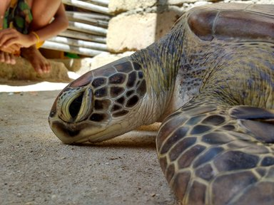 Responding to a turtle stranding at one of the offshore islands.