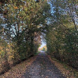 bici galleria alberi autunno