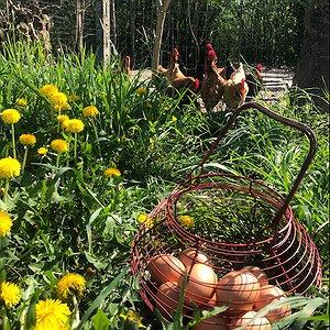 le uova delle nostre galline