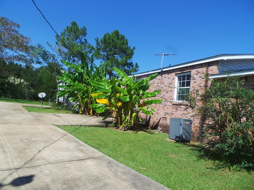 Photograph of 7 Willie Roberts Road, Jayess, MS 39641