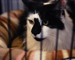 Kitty Daycare