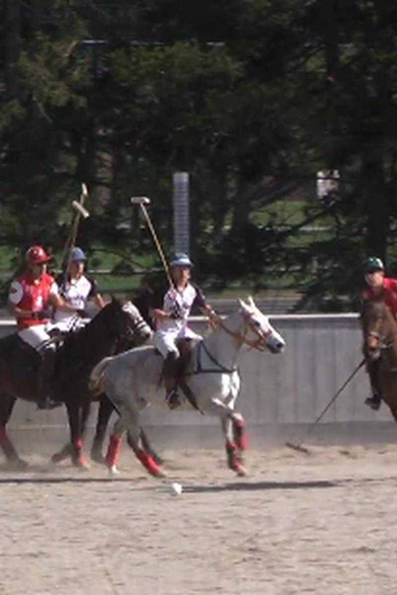 Harvard Men's Polo v. Stanford