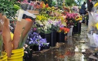 Brattle Street Florist