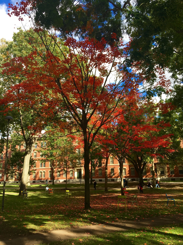Fall Foliage Step 2