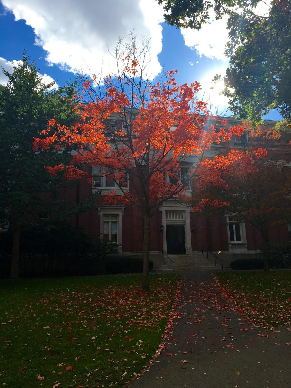 Fall Foliage Step 3