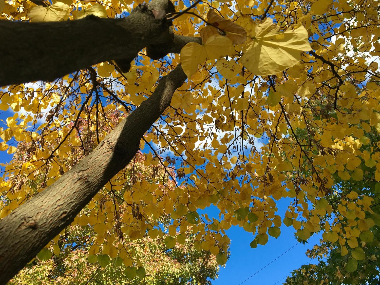 Fall Foliage Step 4