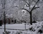 Snow Harvard