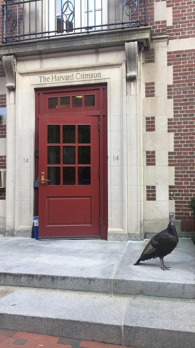 The Harvard Turkey