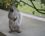 Perched Squirrel