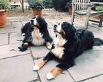 Kirkland Doggos Max/Bella