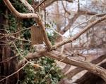 Metasequoia Tag
