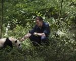 'Pandas' still