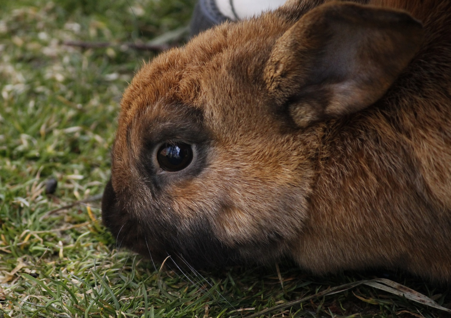 Bunnies Take the Quad