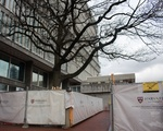 Smith Campus Center Trees
