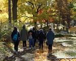 Walking Through Mt Auburn