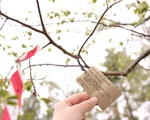 Arnold Arboretum Tree