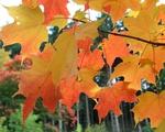 October Still