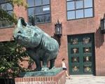Rhino why I declared integrative bio