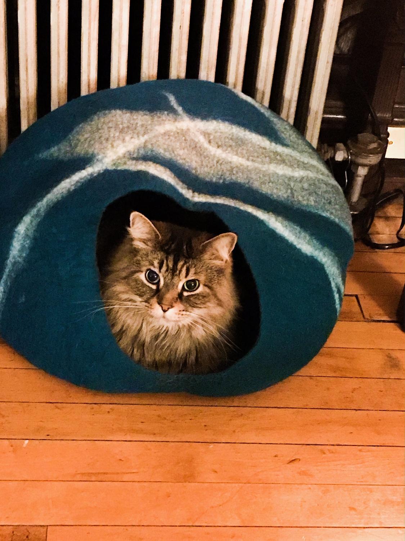 Pets of Harvard Boris in a house