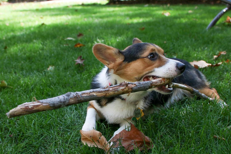 Oshie with stick 2