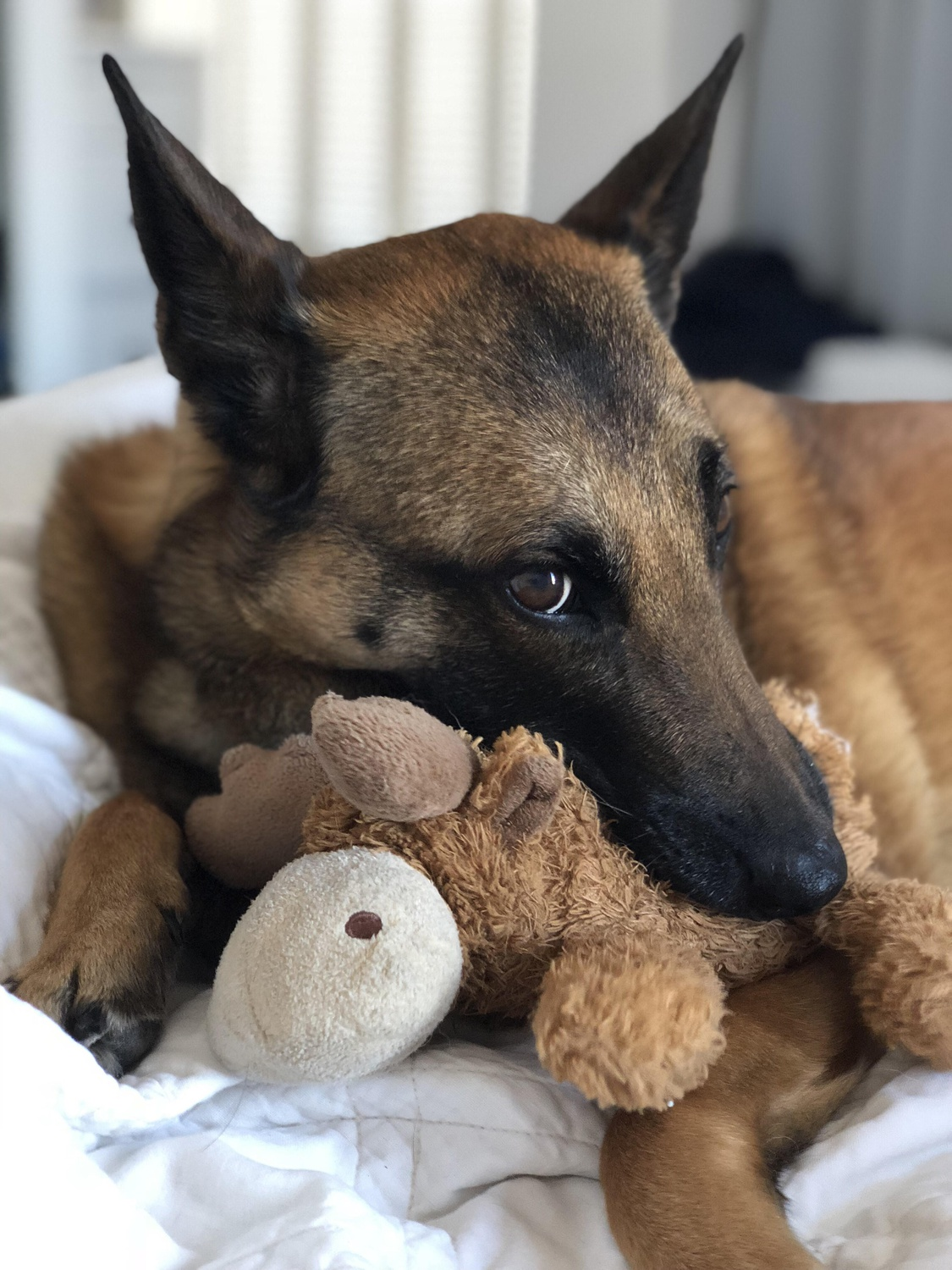 Bailey with Toy