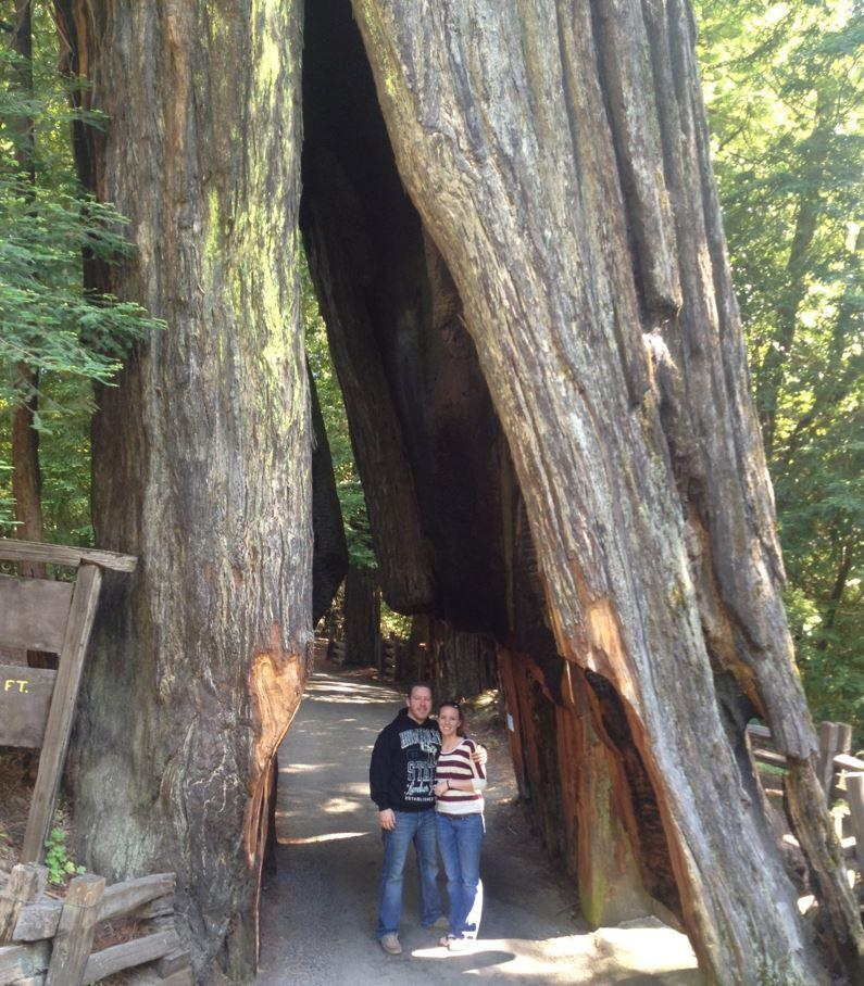 Drive-thru Redwood Tree in Leggett, CA