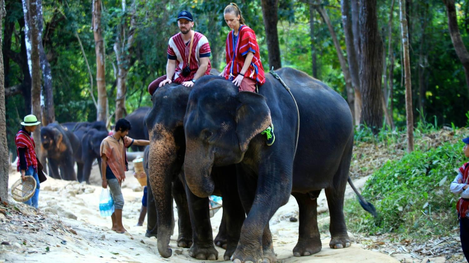 Elephant sanctuary in Chiang Mai, Thailand