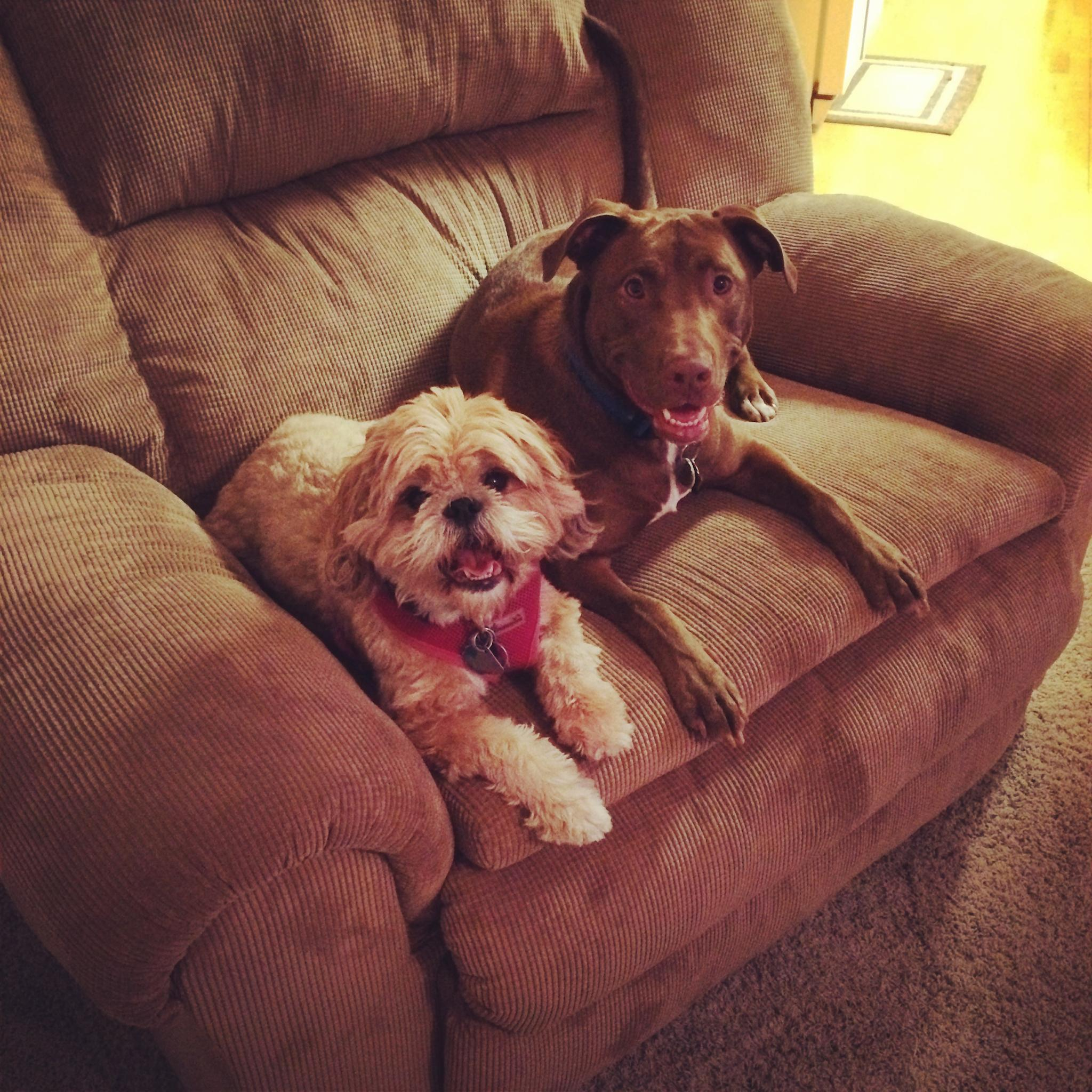 John and Allie's dogs: Meriwether and Diesel